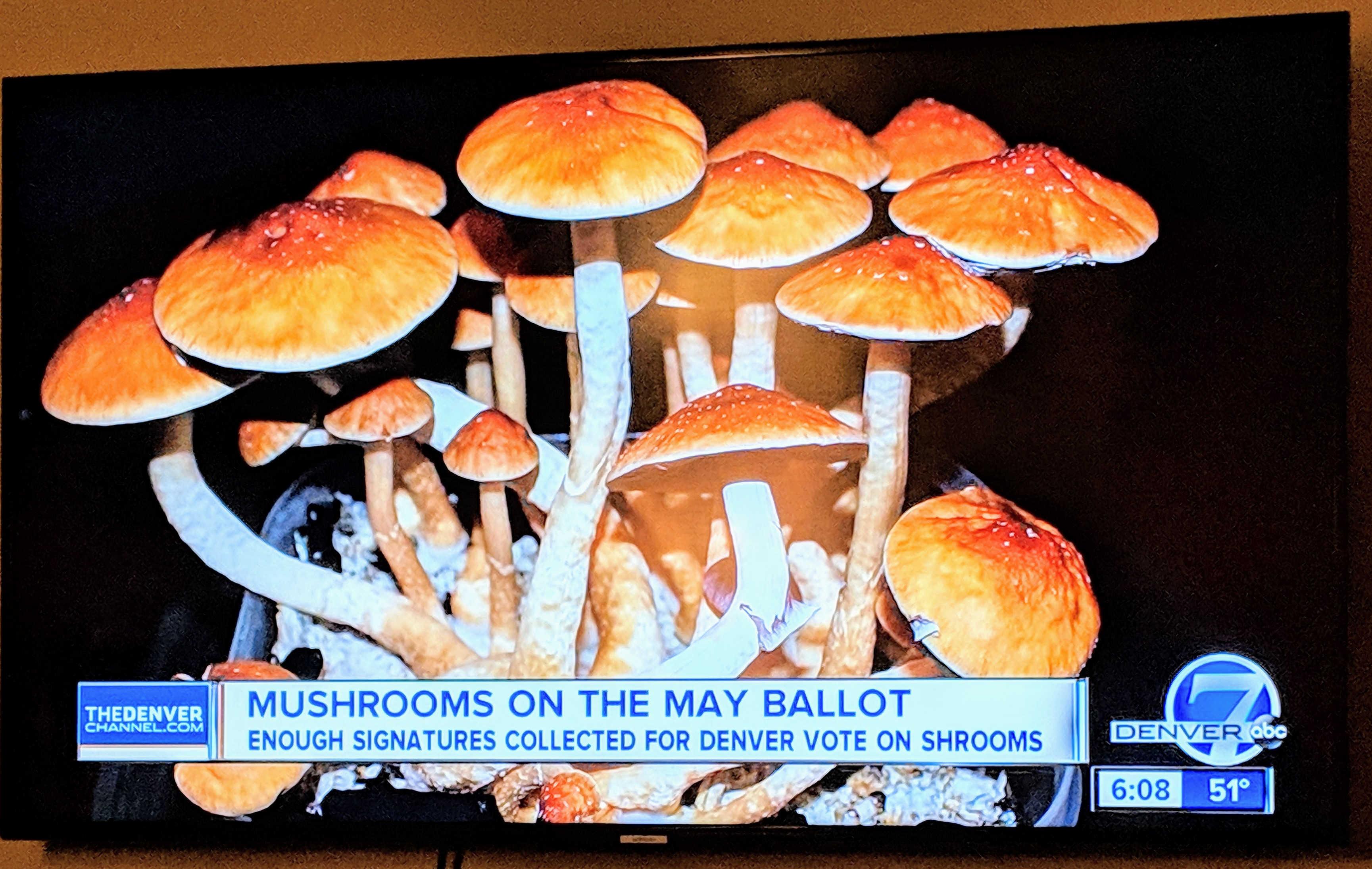 photo - magic mushrooms on TV Denver