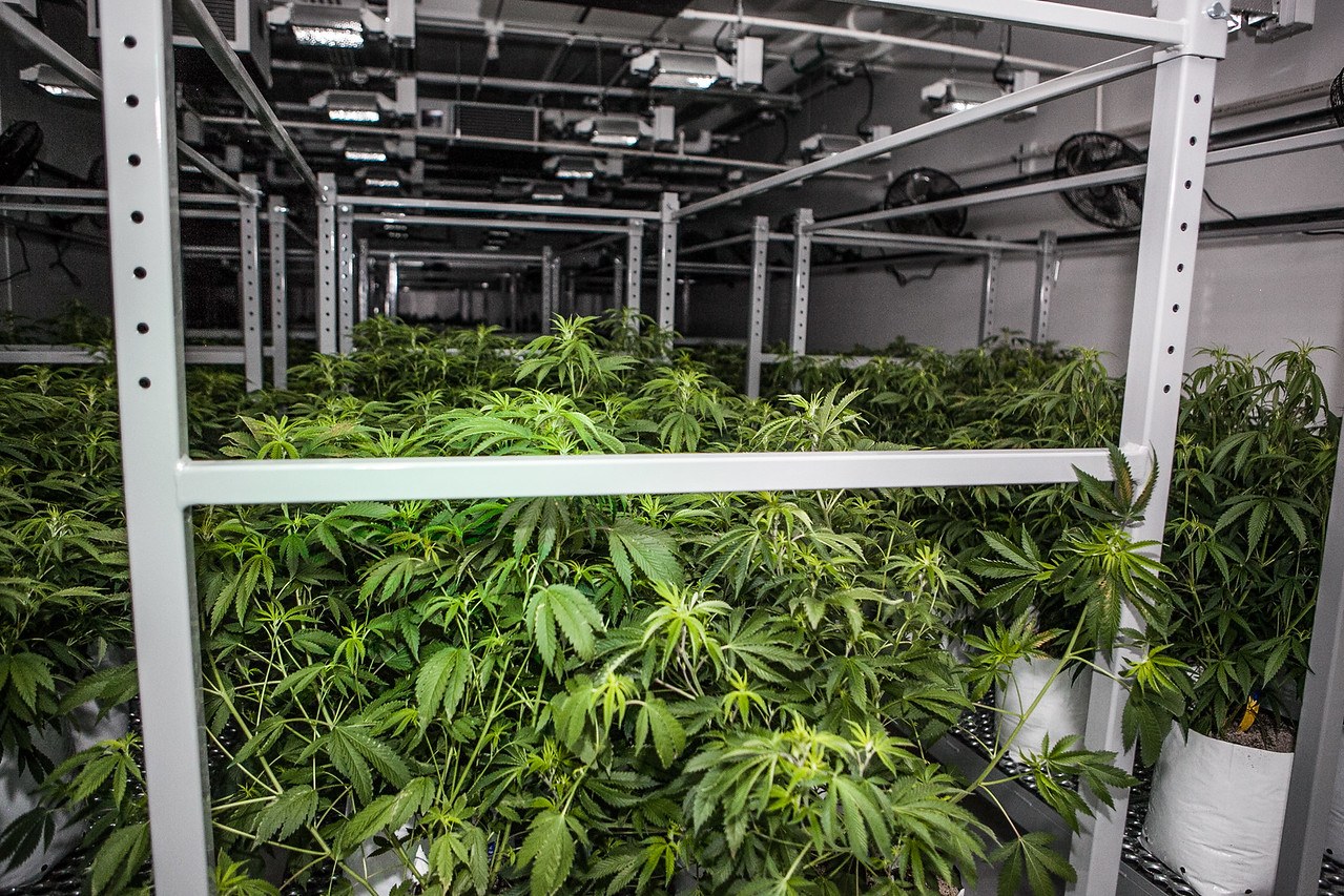 photo - medpharm grow
