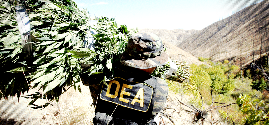 Image result for dea and marijuana